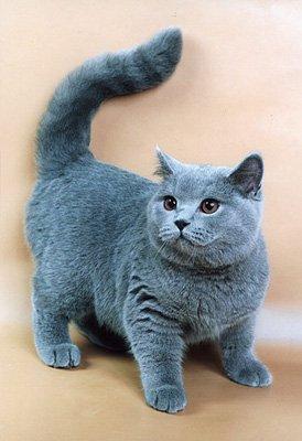 кошка - не плюшевая игрушка