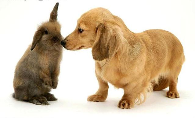 А я с кроликом дружу