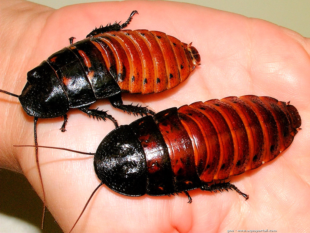Два таракана