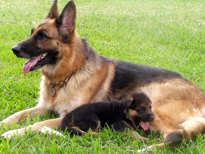 Мамаша со щенком