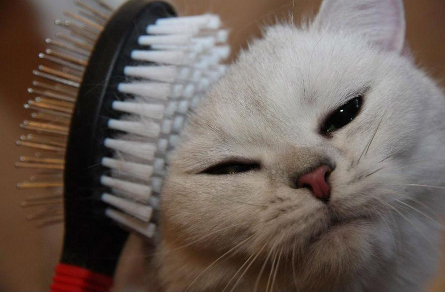 Щетка для кошки